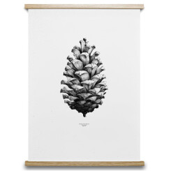 Poster 1:1 Pine Cone blanc, 50x70 cm