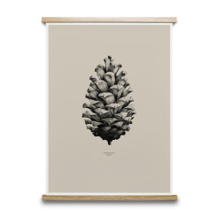 Poster 1:1 Pine Cone sable, 50x70 cm